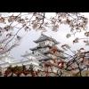 Парфюмерная география. Вежливость и утонченность японских ароматов
